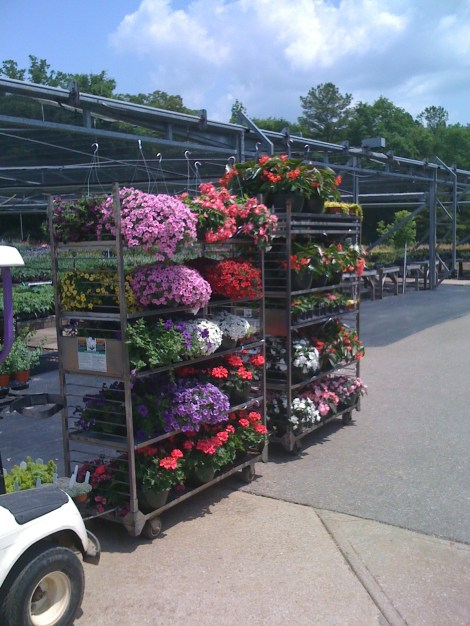 calibrachoa, geranium, impatiens and begonia dragon wing hanging baskets